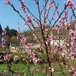 Chambre d'hôte et gîte en location pour les vacances de Pâques et printemps près de Saint-Malo en Bretagne